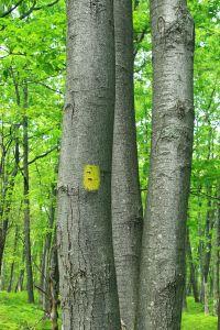 moss, lichen, grass, wood, tree, nature, leaf, forest, landscape, plant