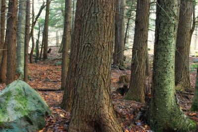 woodland, moss, stone, ground, tree, nature, leaf, landscape, forest
