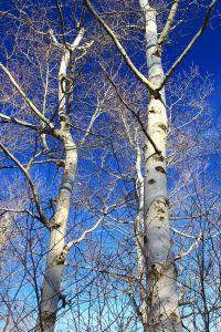 tree, branch, wood, birch, landscape, winter, bark, nature