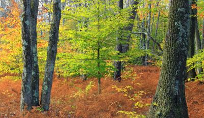 wood, tree, leaf, nature, landscape, forest, birch, autumn