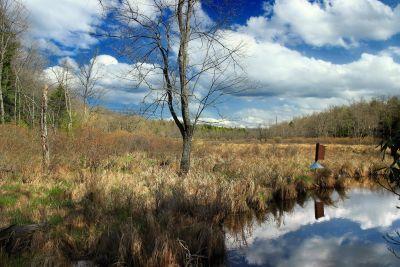 paesaggio, albero, natura, legno, foresta, cielo, neve, fiume