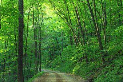 ξύλο, φύλλα, φύση, αυγή, δέντρο, τοπίο, ομίχλη, ήλιος, ομίχλη