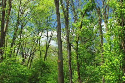 Holz, Natur, Blatt, Landschaft, Baum, Umwelt, Flora, Sonne