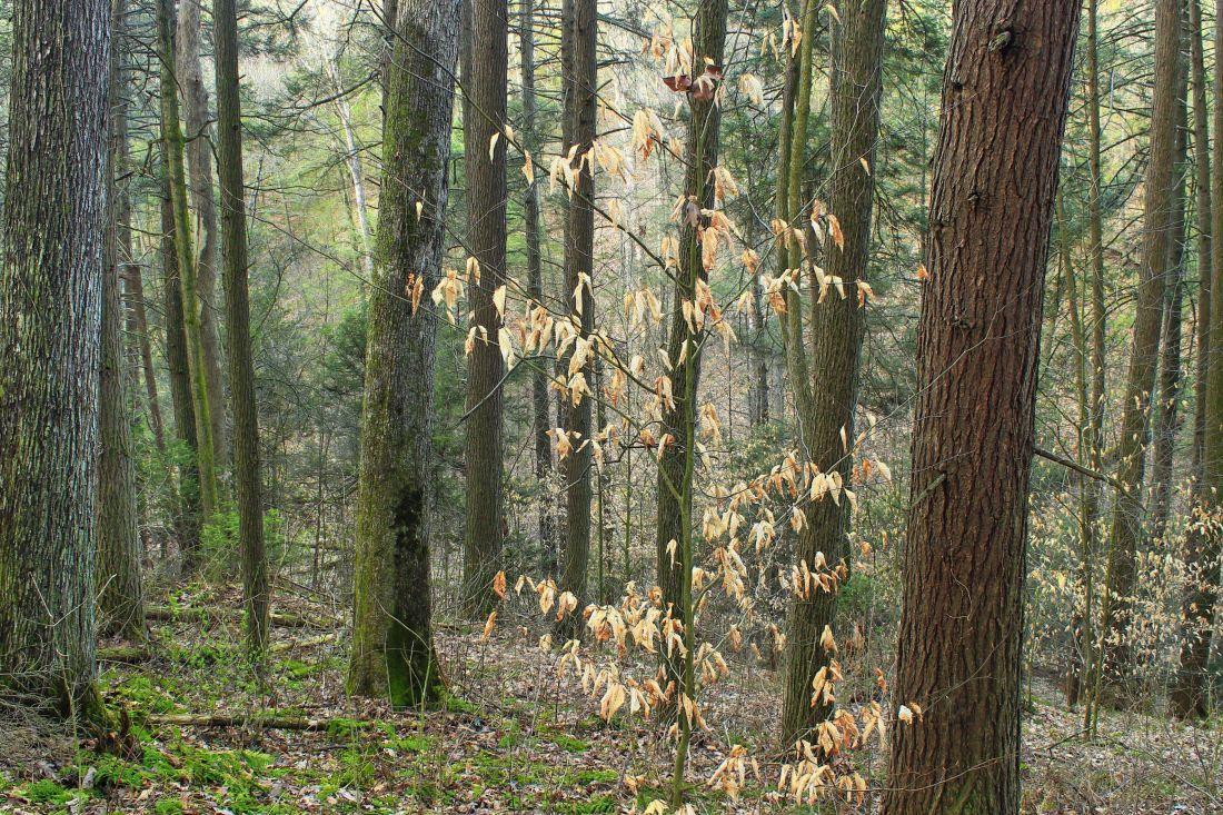 foto gratis legno albero paesaggio natura licheni muschio erba foglia ambiente foresta. Black Bedroom Furniture Sets. Home Design Ideas