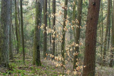 wood, tree, landscape, nature, lichen, moss, grass, leaf, environment, forest