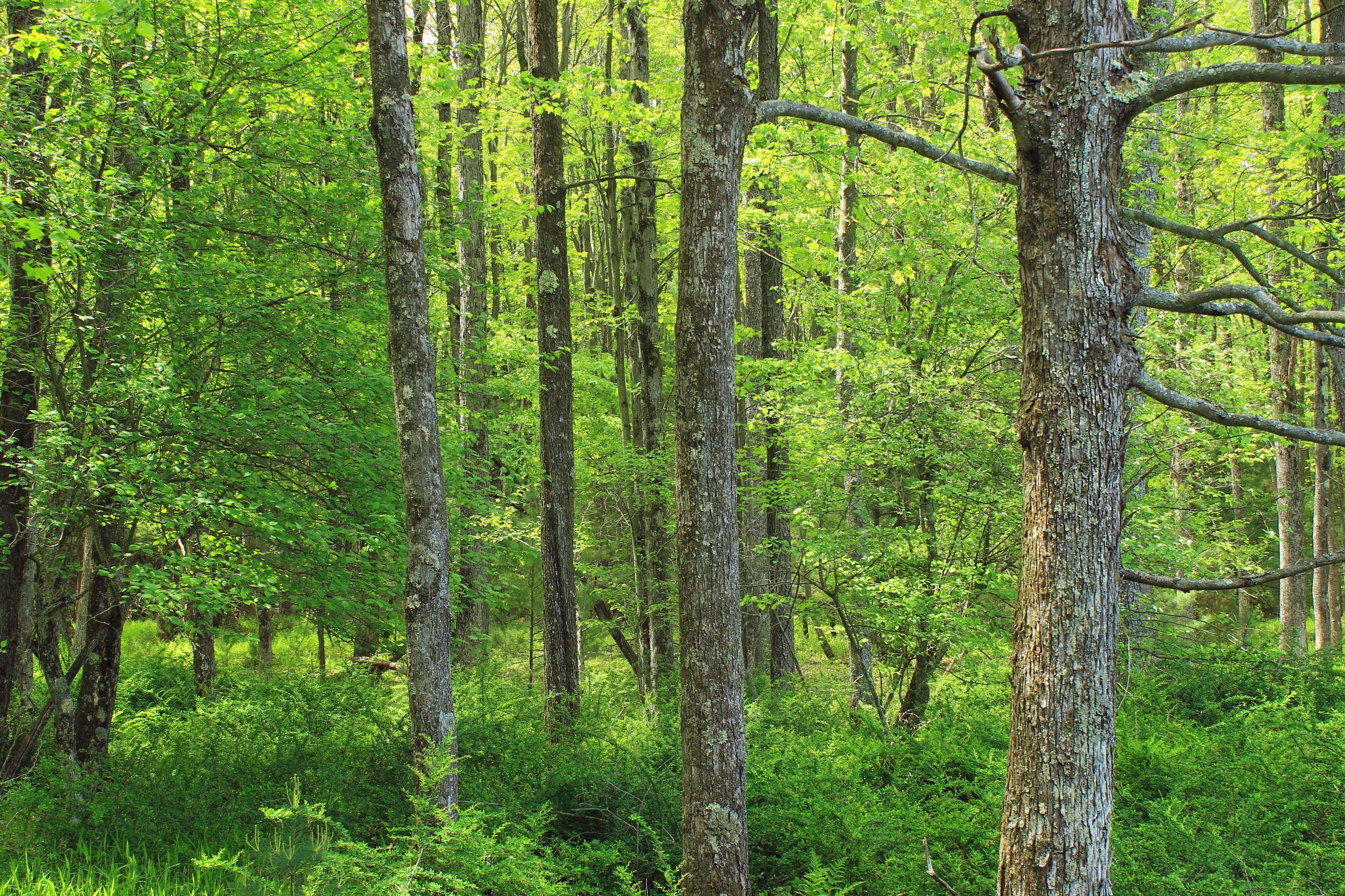 Free Picture Wood Nature Landscape Tree Leaf Summer