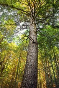 Holz, Baum, Natur, Blatt, Landschaft, Umwelt, Wald