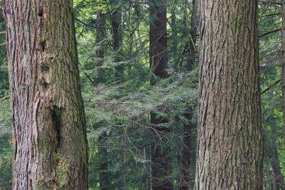 wood, tree, nature, conifer, landscape, forest, fence
