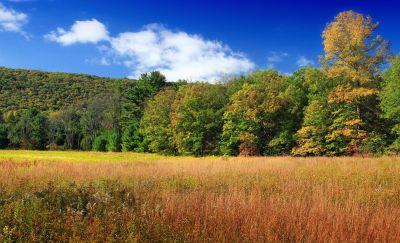 paesaggio, albero, natura, legno, campo, cielo, pianta