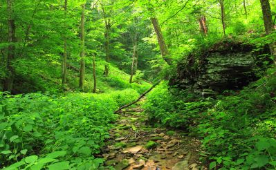drevo, príroda, list, krajiny, strom, lesa, rastlín, trávy