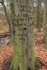 дърво, дървен материал, природата, листа, кора