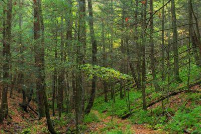 wood, nature, tree, leaf, landscape, environment, forest