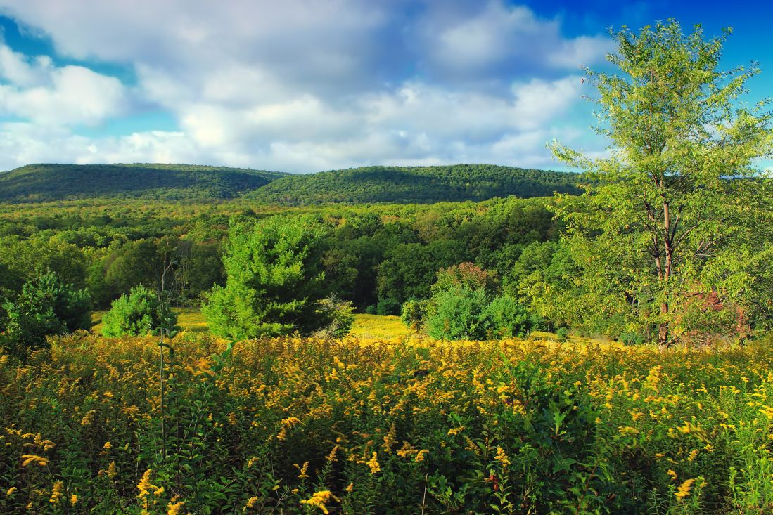 landscape, nature, tree, wood, sky, grass, field, foliage, meadow