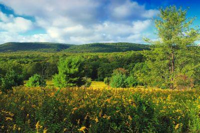 Landschaft, Natur, Baum, Holz, Himmel, Rasen, Feld, Laub, Wiese
