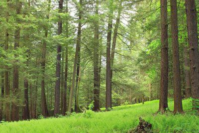 Holz, Natur, Baum, Landschaft, Blatt, Umwelt, Sommer