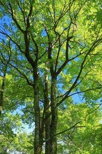 Blatt, Natur, Baum, Holz, Landschaft, Umwelt, Sommer