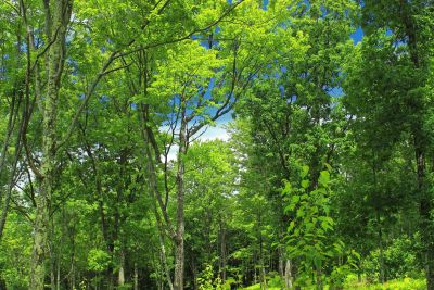 Holz, Natur, Blatt, Landschaft, Baum, Umwelt, Sommer