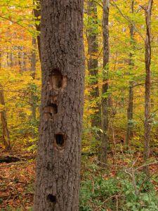 дървен материал, дърво, природа, листа, топола, есен, гора, пейзаж