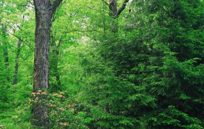 wood, tree, leaf, nature, landscape, environment, plant, forest