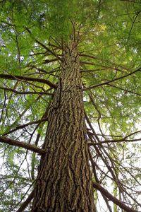 bois, arbre, nature, feuilles, environnement, forêt, plante, paysage