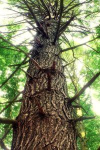 дърво, дърво, кора, природата, околната среда, листа, горски, растителна