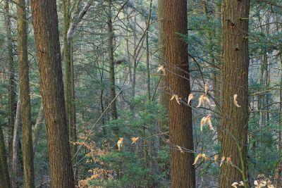 wood, tree, nature, landscape, leaf, conifer, fence, forest