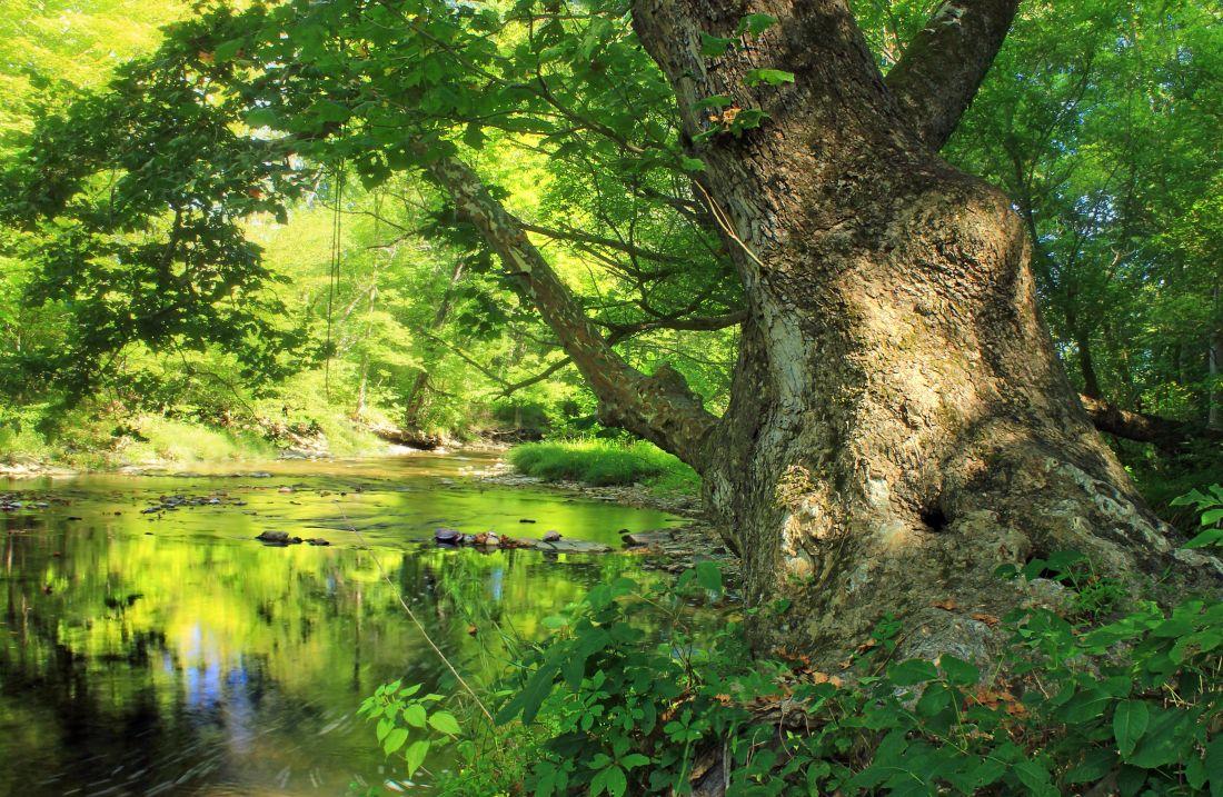 natur, trä, träd, löv, landskap, skog, mark, floden