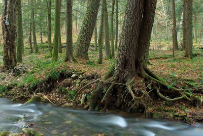 trä, träd, natur, blad, landskap, moss, miljö, skog