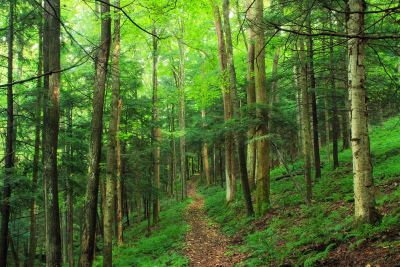 trä, natur, landskap, träd, löv, miljö, skog