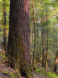 дърво, природа, дърво, листа, пейзаж, гора, растение, есен