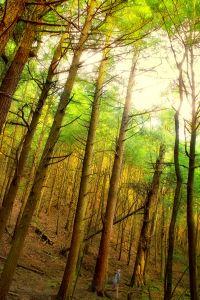 wood, tree, nature, leaf, landscape, dawn, forest, autumn