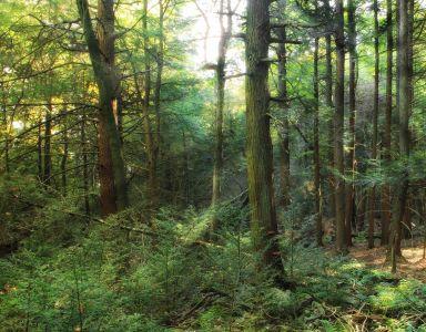 trä, landskap, träd, natur, blad, miljö, dawn, dimma
