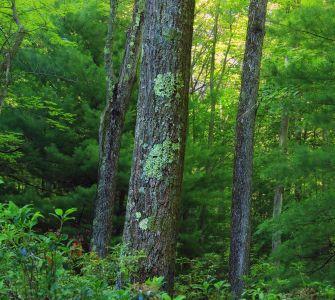 tre, tre, natur, blad, landskapet, skogen, moss, plante