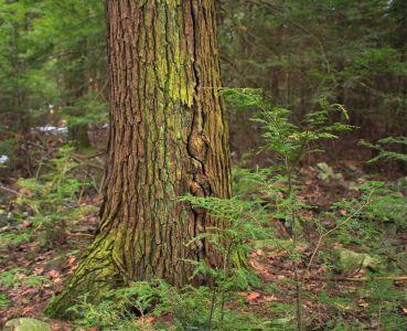 tre, tre, natur, blad, bark, skog, landskap, anlegg