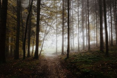 köd, köd, fa, fa, táj, Hajnal, levél, természet