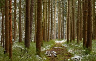 wood, nature, leaf, tree, landscape, forest, poplar, birch