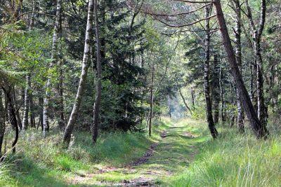 wood, landscape, nature, tree, environment, leaf, flora, summer