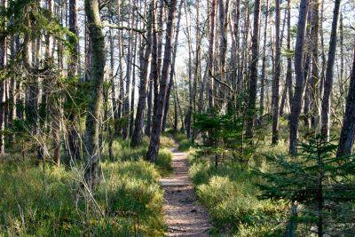 дърво, пейзаж, дърво, природата, околната среда, листа, бреза, гора
