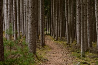 wood, tree, nature, leaf, landscape, forest