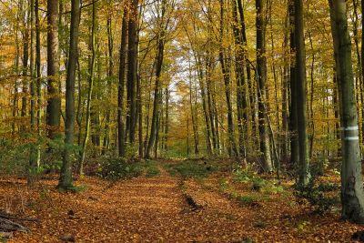 madera, hoja, árbol, paisaje, naturaleza, medio ambiente, haya, amanecer