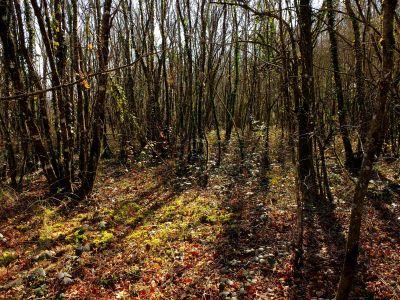 Holz, Baum, Landschaft, Blatt, Natur, Umwelt, Birke, Wald