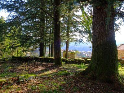 나무, 나무, 풍경, 자연, 잎, 환경, 숲