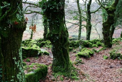 wood, tree, nature, leaf, landscape, moss, forest, plant, beech, lichen