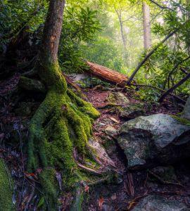 madera, musgo, árboles, naturaleza, hoja, paisaje, medio ambiente, flora