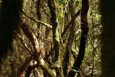 wood, tree, nature, leaf, rainforest, landscape, forest, plant
