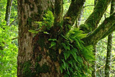 wood, tree, nature, leaf, environment, bark, flora, moss