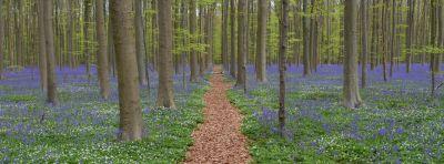 wood, nature, landscape, tree, leaf, flora, beech, forest