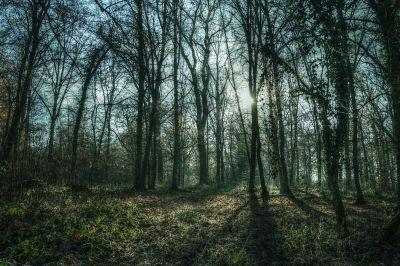wood, tree, landscape, nature, fog, leaf, dawn, forest, birch