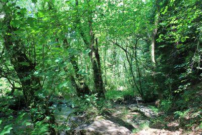 legno, foglia, natura, paesaggio, albero, ambiente, foresta