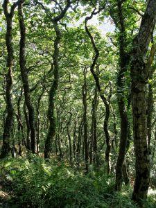 wood, landscape, nature, leaf, environment, tree, flora, forest